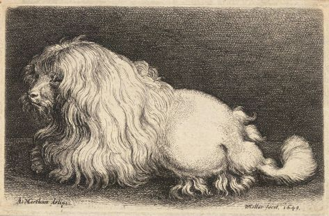 1920px-wenceslas_hollar_-_a_poodle_after_matham