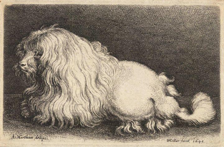 1920px-wenceslas_hollar_-_a_poodle_after_matham